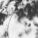 Wind Moving Vines.jpg