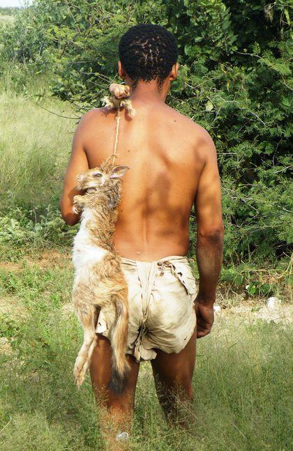 bushmen-hare.jpg
