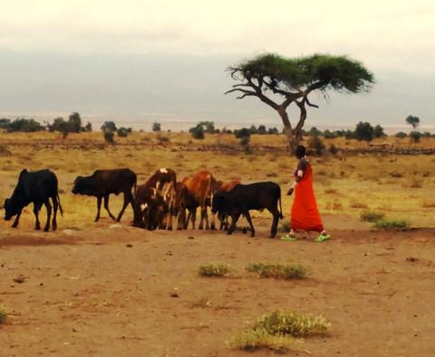 a young shepherdess.jpg