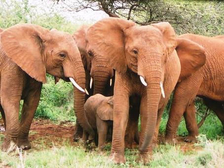 THE WISDOM OF ELEPHANTS