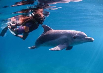 swimming with dolphins at ponto 2 dolphi