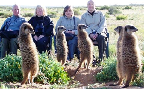 people watching meerkats.jpe