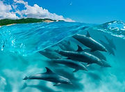 dolphins surfing waves at ponto national