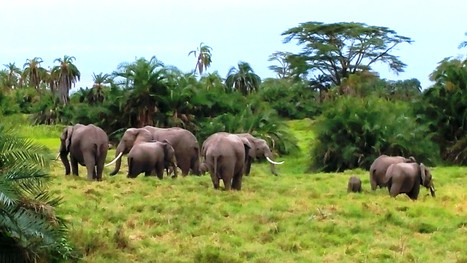 eles arund elephant research camp.jpg