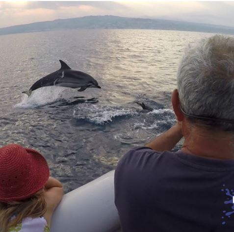 watching dolphins from a boat.JPG.jpg