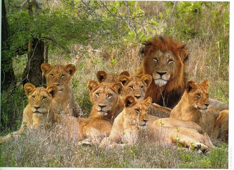 king of the beasts.JPG.jpg