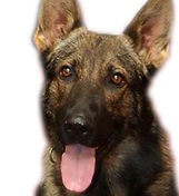 K9-3 Officer Samsn