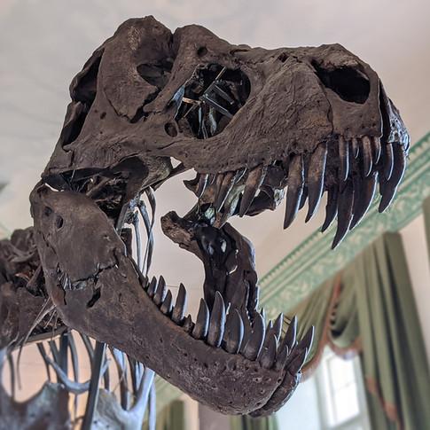 Titus: T. rex is King, Wollaton Hall