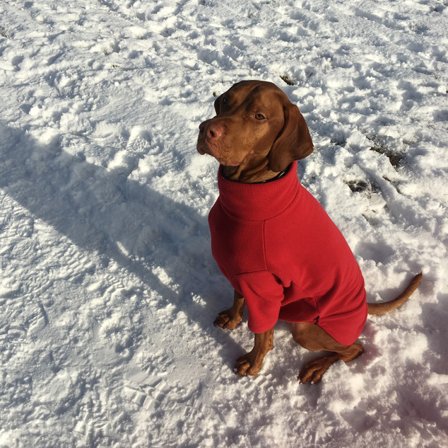 Suitable for wearing in rain, snow and heavy winds, Hotterdog fleece jumpers keep your dog toasty warm