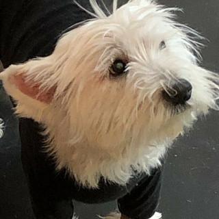 Alfie posing for the camera in his hotterdog coat