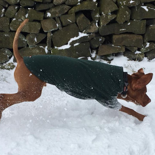 A dog coat that's ready and suitable for action in ALL weathers