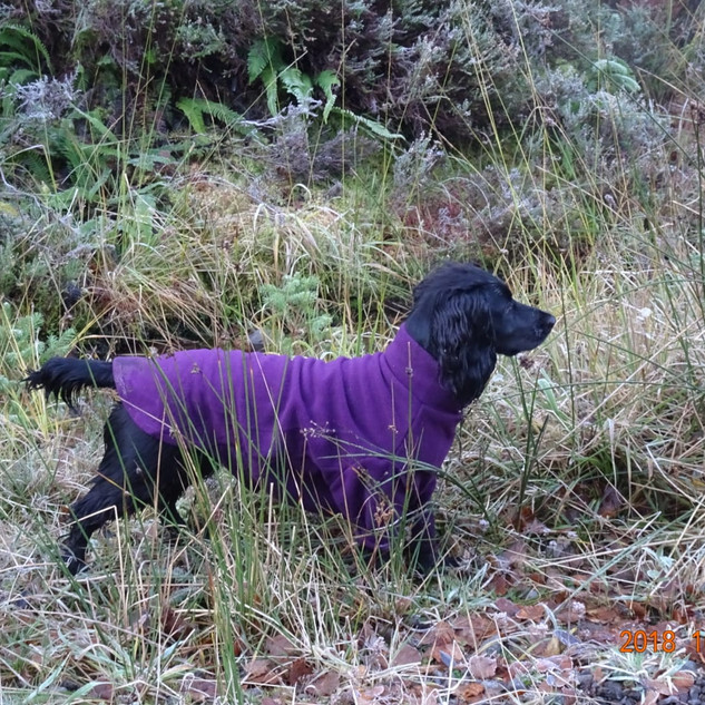 The brightly coloured dog coats by Hotterdog mean you can easily see your dog no matter what the environment