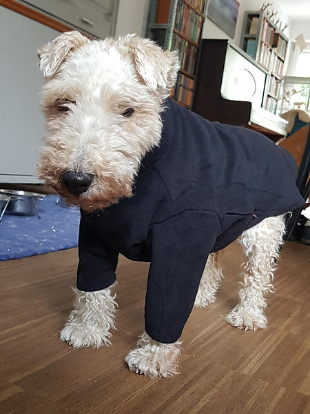 Dog Jumpers, Coats, Anxiety Suits and Cooling T-Shirts for Dogs by Hotterdog (an Equafleece brand)