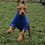 Thumbnail: Hotterdog Dog Jumper (L)
