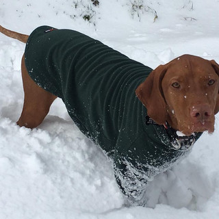 Hotterdog Fleece Dog Jumpers are perfect for walkies in the snow