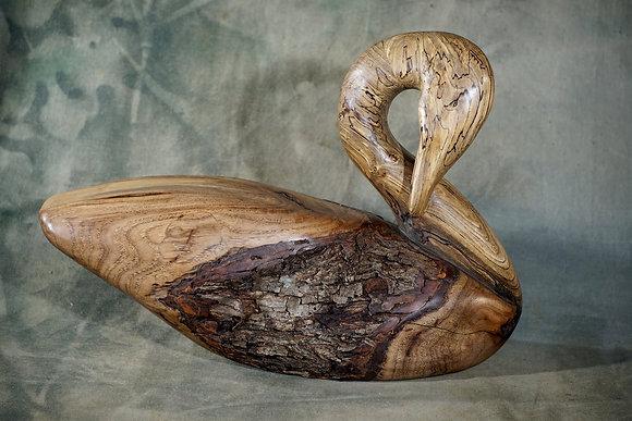 Spalted Natural Preening Swan