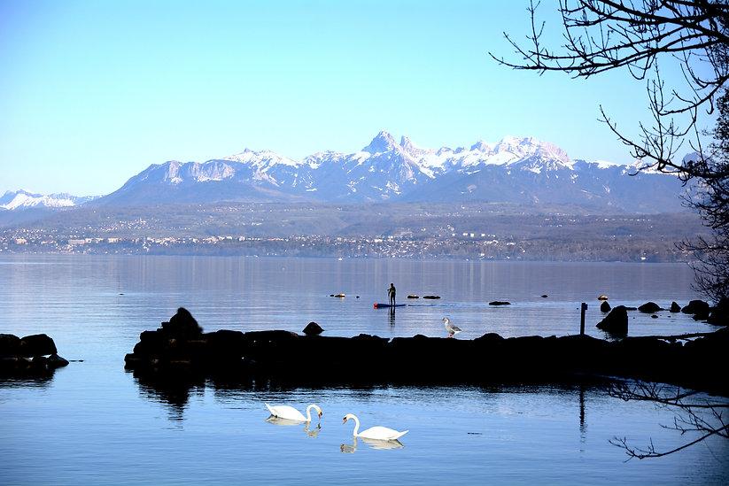 Lac Excenevez avec oie et  deux cygnes .