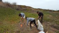 Actividad Proyecto Biochar