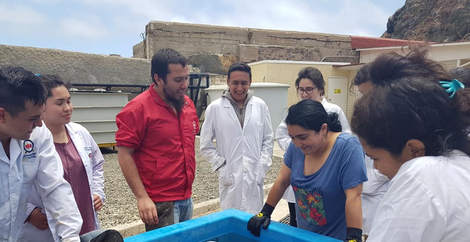 LEBMA's outreach activity to Marine Biology students of the Andrés Bello University