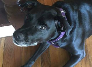Gilda Radner, A Dog, and Two Broken Legs!