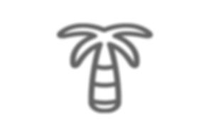 palmier.png
