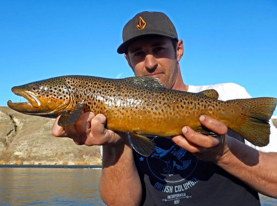 Bow Brown
