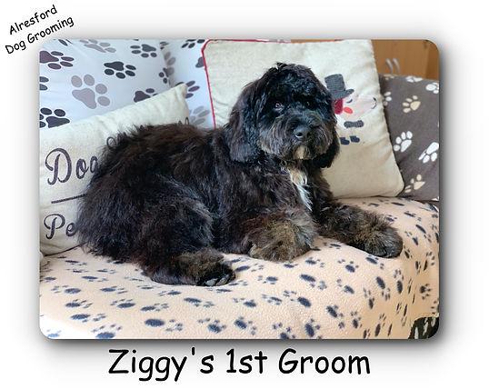 Ziggy's 1st groom 23.7.20.jpg