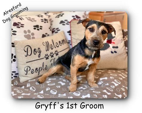 Gryff's 1st groom.jpg