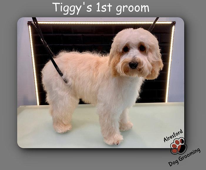 Tiggy's 1st groom 29.10.20.jpg