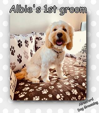Albie's 1st groom.jpg
