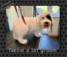Nellie's 1st groom.jpg