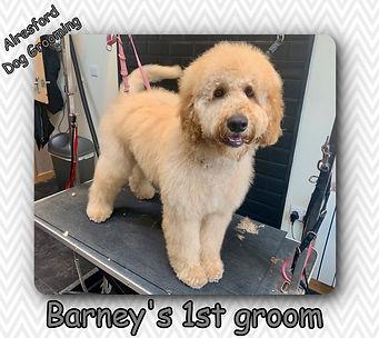 Barney's 1st groom.jpg