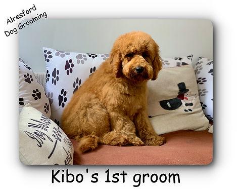 Kibo's 1st groom.jpg