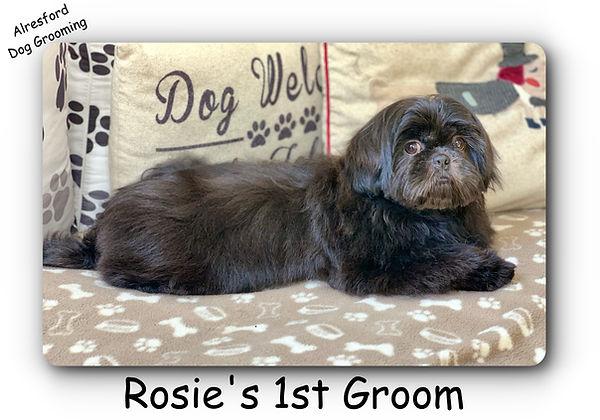 Rosie's 1st groom.jpg