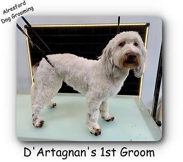 D'Artagnan's 1st groom.jpg