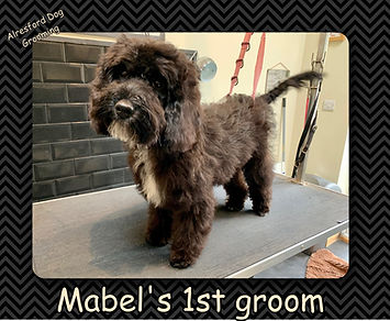 Mabel's 1st groom.jpg