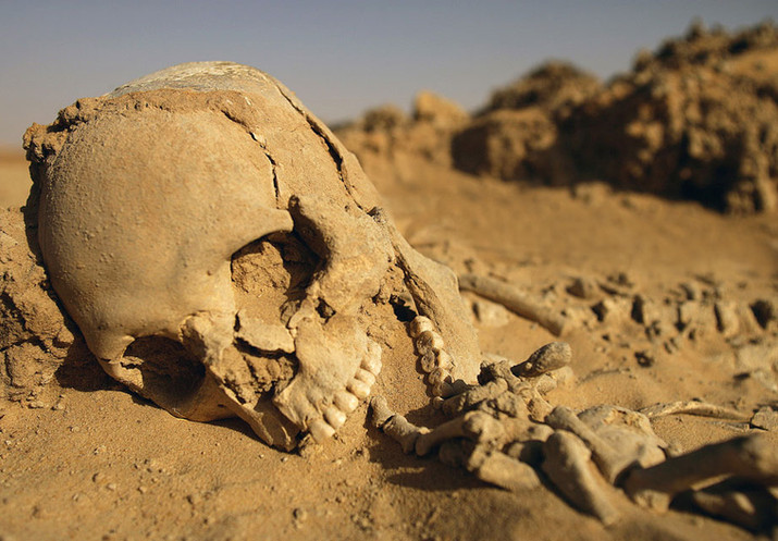 Something is Killing People in the Desert