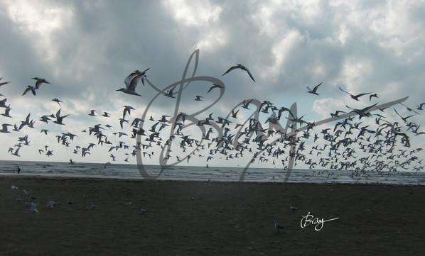 Seagulls at Port Aransas