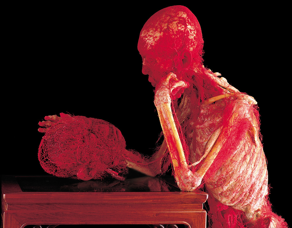 Art of Anatomy: Interview with the Creative Director of Body Worlds and Managing Director of The Institute for Plastination, Dr. Angelina Whalley | Curtesy of Body Worlds