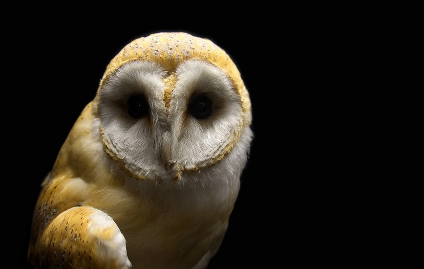 Tales of Taxidermy and Whimsy: Modern art from the Victorian era