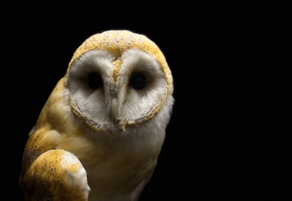 Tales of Taxidermy and Whimsy: Modern art from the Victorian era | Owl