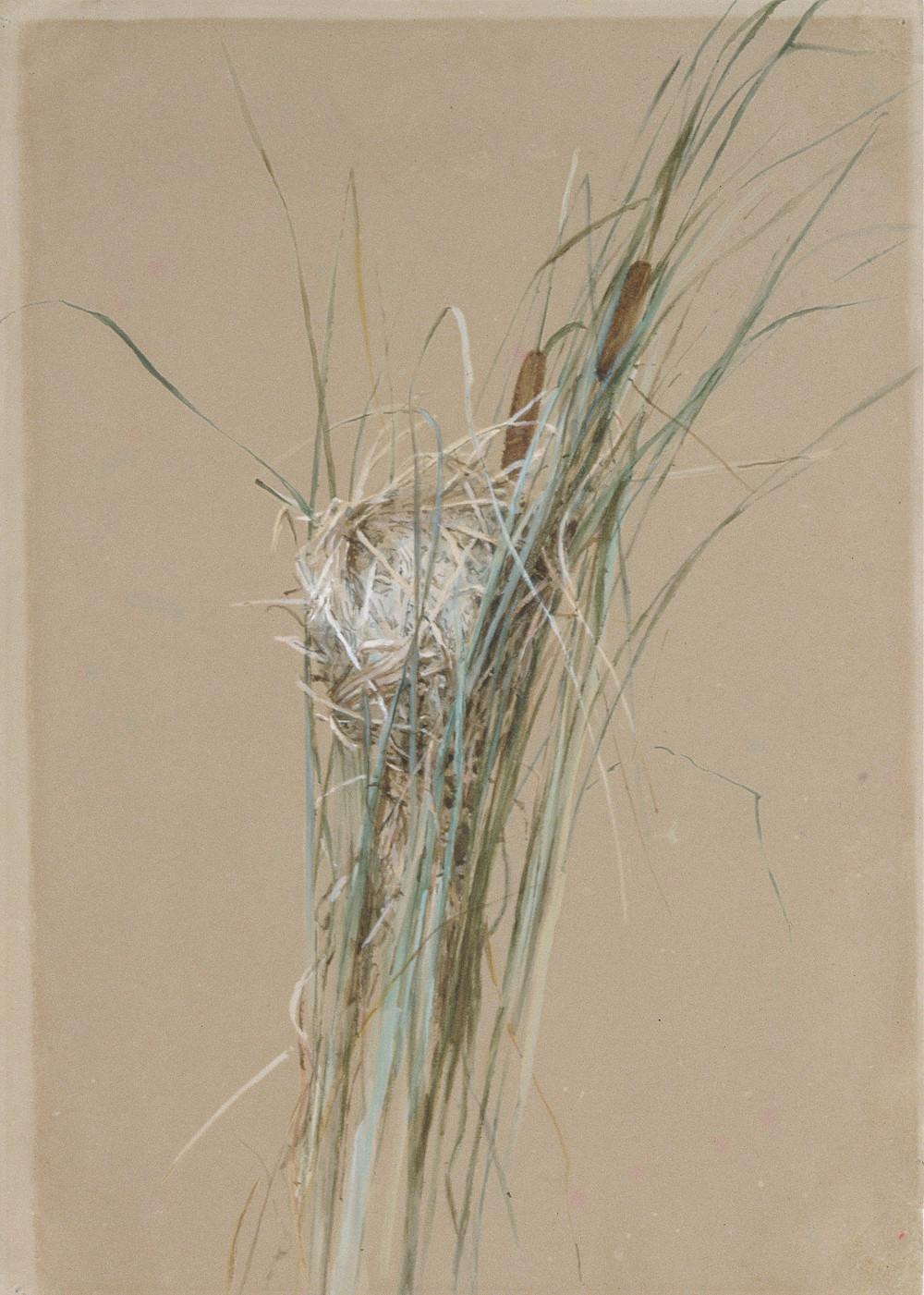Bird's Nest in Cattails (1875) by Fidelia Bridges (1834 - 1923)