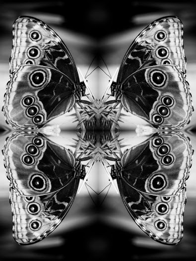 """""""No 2"""" (2015) from the Papiliones Series by Indira Cesarine"""