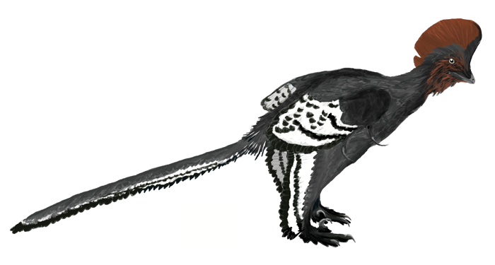 Illustration of the basal troodontid Anchiornis huxleyi. Colors based on the patterns recovered by Li et al. 2010. | Credit Matt Martyniuk	via Wiki  CC BY 3.0