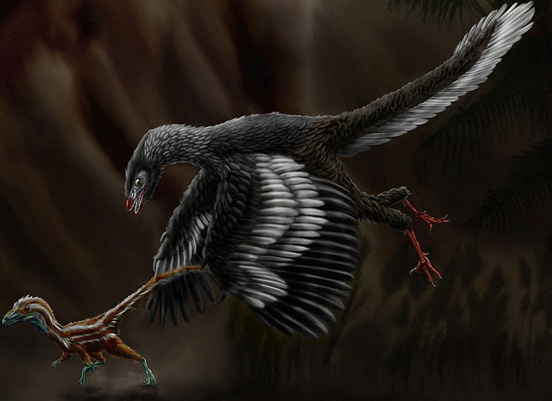 Restoration of Archaeopteryx chasing a juvenile Compsognathus, Credit Durbed via http://durbed.deviantart.com/art/Archaeopteryx-litographica-313930947 Wiki CC BY-SA 3.0
