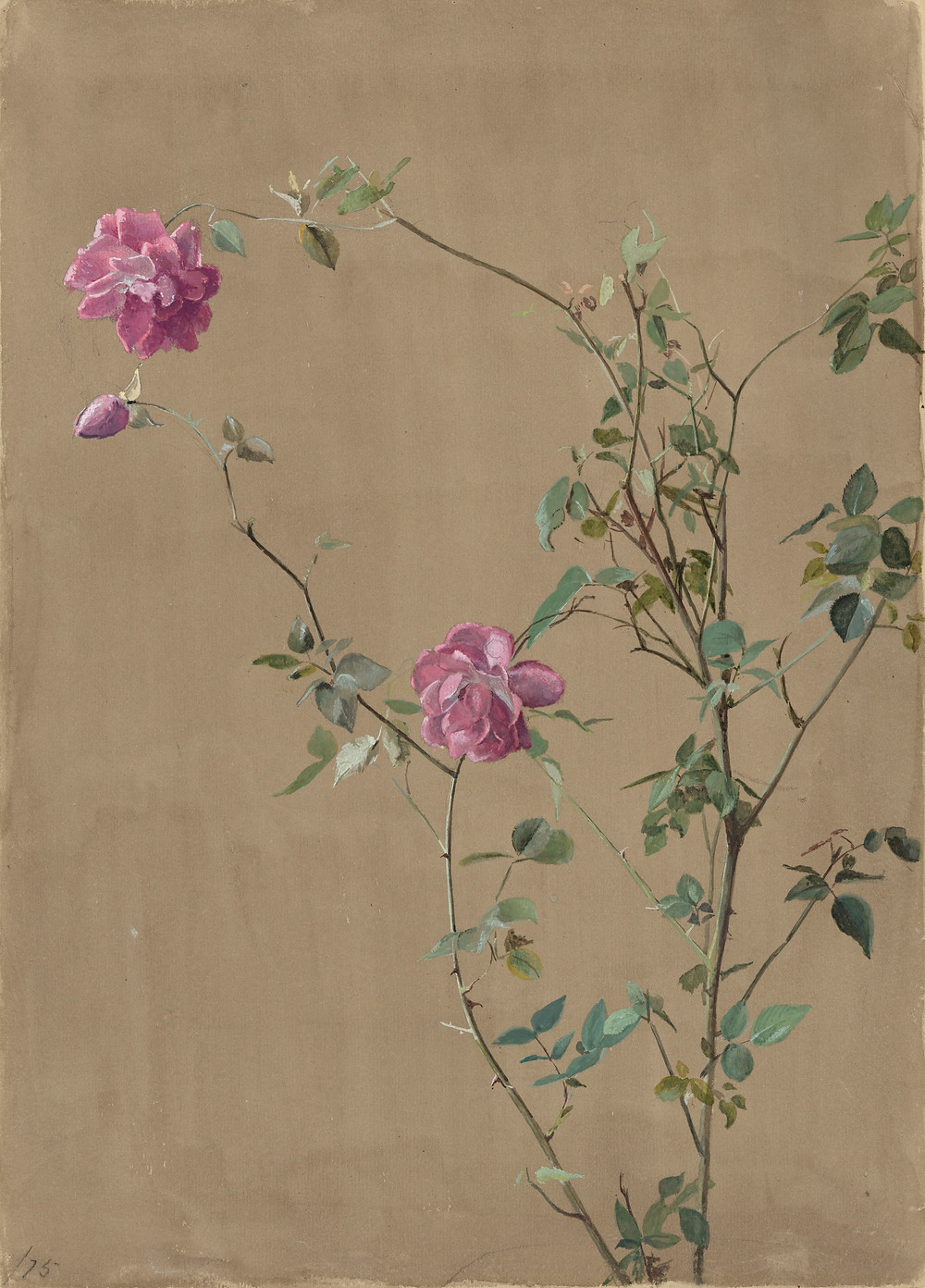 Pink Roses (1875) by Fidelia Bridges (1834 - 1923)