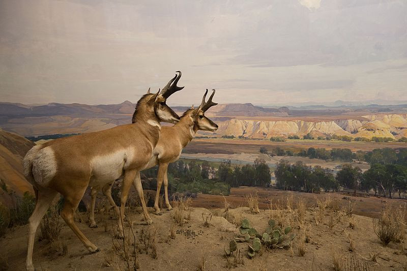 """Tales of Taxidermy and Whimsy: Modern art from the Victorian era 