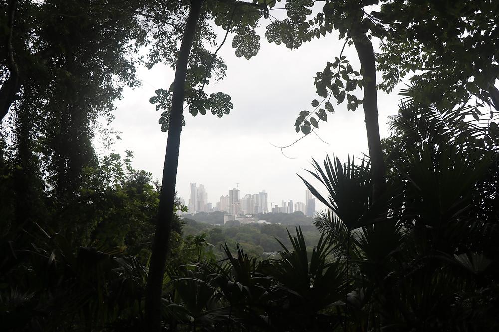 A view of Panama City, Panama, through the foliage of Metropolitan Natural Park.