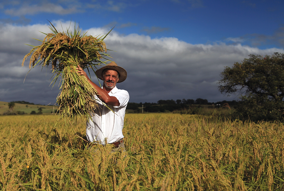 asociados agricultura biodinamica colombia