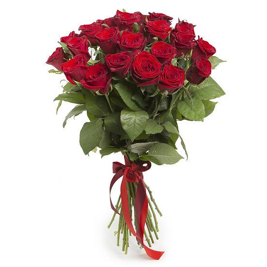 Romantische rote Rosen mit Masche | 12 Stück